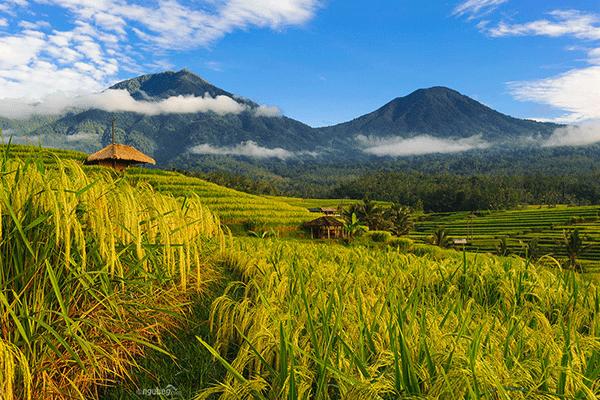 Bali Rice Terrace Tour