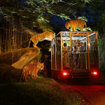 Bali Night safari