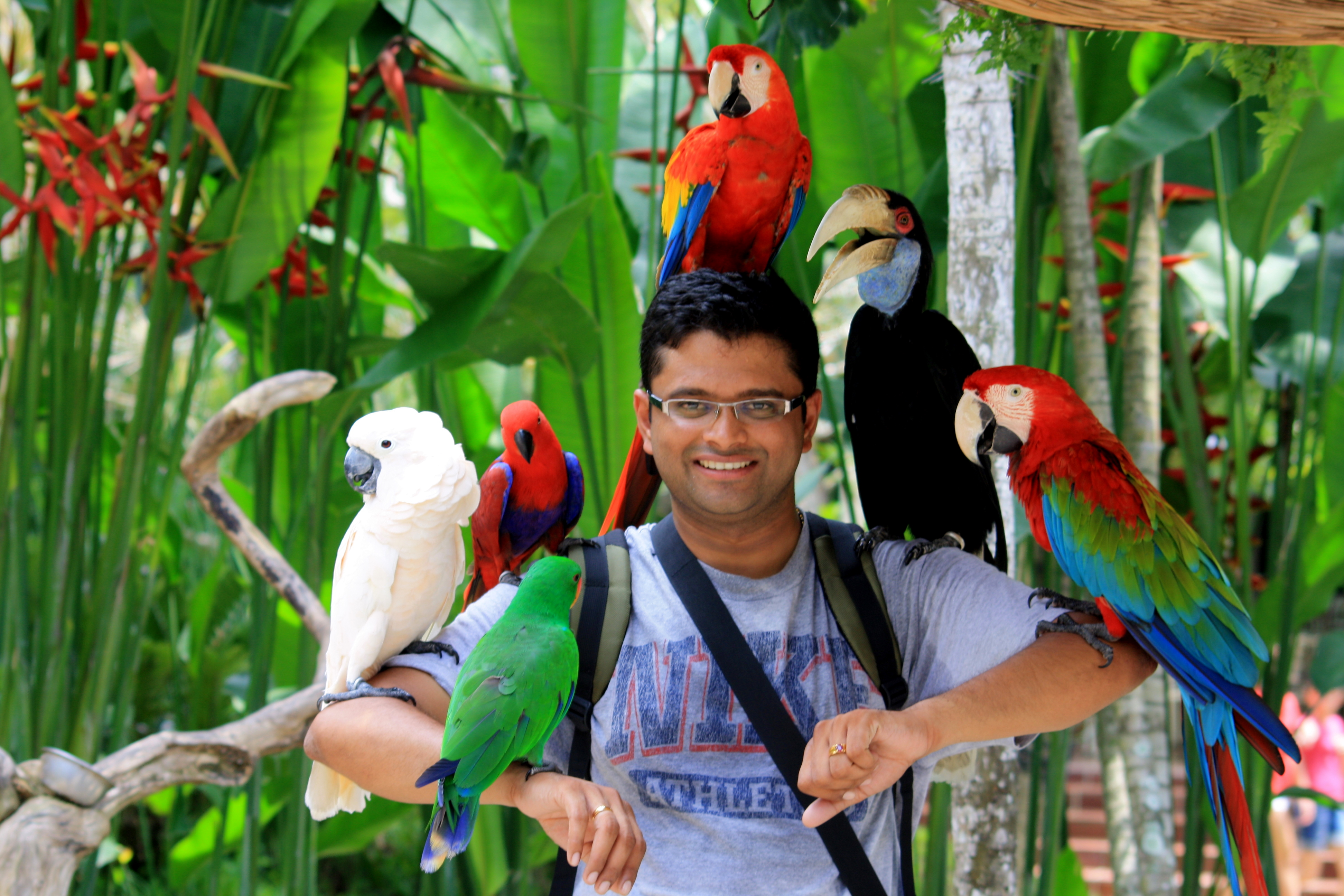 Bali Bird Park Is Best Place For Visit On Holiday In Bali Rukmana